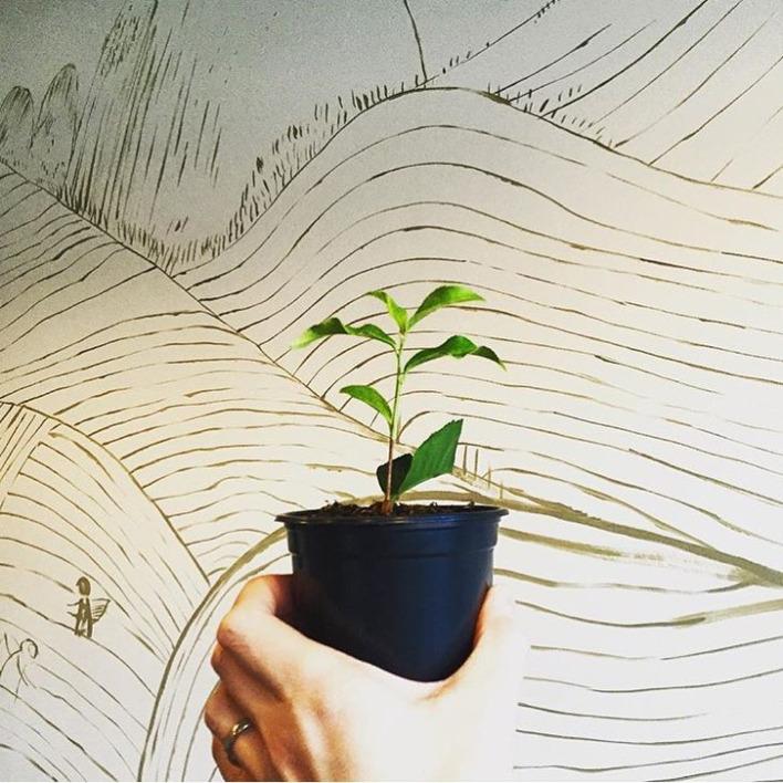 Grow NI Tea Project!