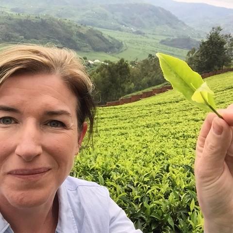 Annie hand picking tea in Rwanda