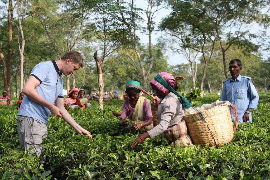 SUKI Oscar Assam Tea Plucking