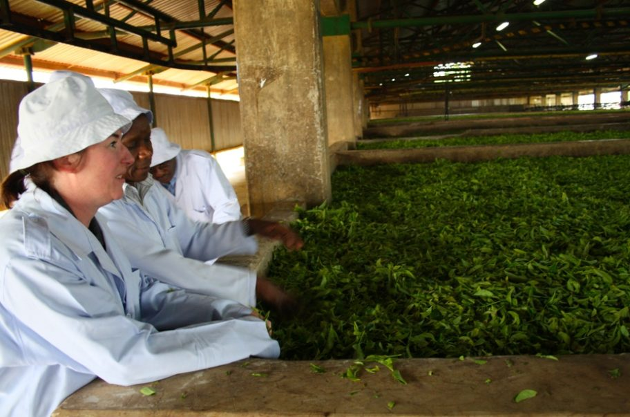 Annie fresh loose leaf tea smelling in Rwanda